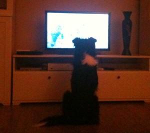 Fernseh-Lutz